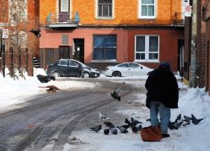 Le vieux monsieur et les pigeons