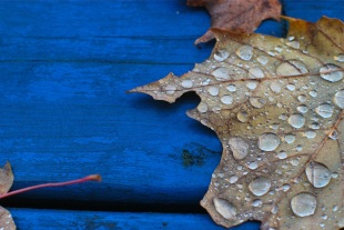 feuille_automne