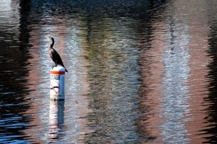 Sur le canal Lachine, Montréal (Rémi Leroux)