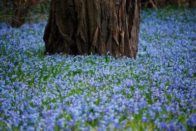 Dans un parc du côté de Westmount, avril 2010