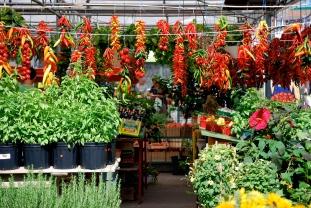 Etal au marché Jean-Talon, août 2010.