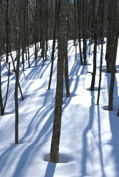 Petit supplément d'hiver dans la forêt du côté de Sutton, Cantons de l'Est (Photo Rémi Leroux)