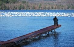 ponton et canards