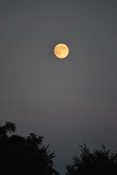 Levée de lune sur la Rivière Rouge (Québec)